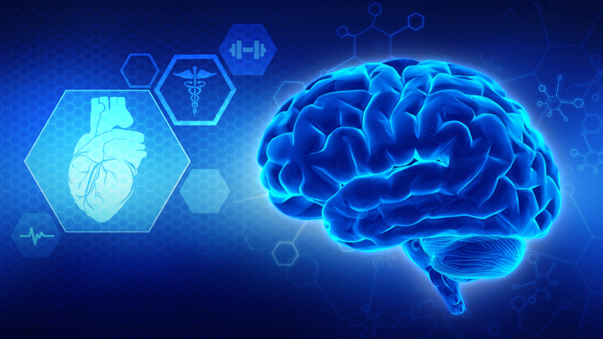 Fasting and the brain (BDNF)